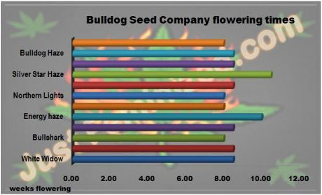 Bulldog Seeds Strains